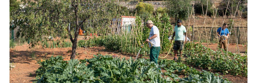 L'Horta amb Gràcia arriba a la seva 8a edició